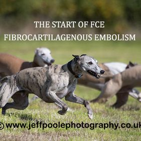 Willow Veterinary Clinic - Ethan's Story - Fibrocartilaginous Embolism (FCE)