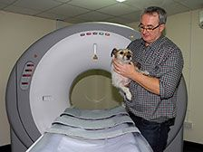 Willow Veterinary Clinic - CT Scan
