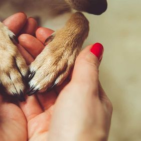 1280-holding-dogs-hands
